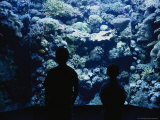 Silhouette of Two Boys at the Denver Aquarium