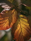 Close View of Dew on Autumn Foliage