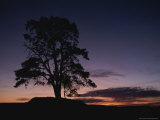 Silhouette of Lone Tree at Twilight