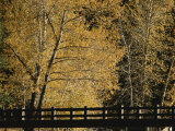 Golden Trees Surround a Footbridge