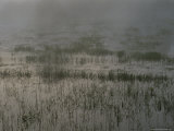 Marshlands in the Mist