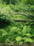 Piedmont Woodland