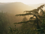 Misty Sunrise Along Pine Gap Trail  Blue Ridge Mountains