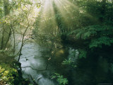 Sunlight Streams Through Trees Above a Creek