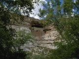 Montezuma's Castle Cliff Dwelling Framed by Trees