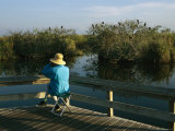 Bird Watching From a Wooden Walkway on the Anhinga Trail