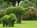 Elephant Topiaries in a Formal Garden