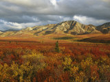 Autumn Colors in Denali National Park