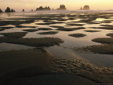 Low Tide on a Beach with Sea Stacks in Olympic National Park