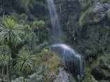 View of a Waterfall in the High-Altitude Rain Forest of Ruwenzori
