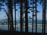 View Through Silhouetted Evergreen Trees of the Pacific Ocean