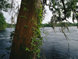 View Across the Savannah River Past a Cypress Tree Laced with Moss