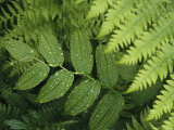 Close Up Detail of a Fern Frond and Vining Plant
