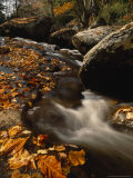 Fox Creek and Autumn Leaves in the Jefferson National Forest