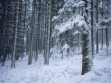 Winter View of the Black Forest with a Fresh Coat of Snow