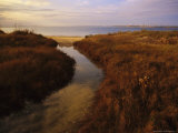 Tidal Creek Through Salt Marsh Grasses
