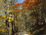 Roy Gap Road Trail