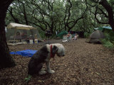 Family and Pet Dog Camping Under Live Oak Trees