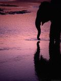 Silhouetted Elephant Reflected in Reu River at Sunset