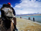 Camel Rides by Lake