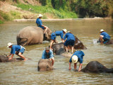 Mahouts Bathing Elephants  Thai Elephant Conservation Centre