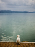Dog Overlooking Lago Trasimeno