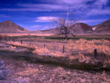 Bare Tree in a Paddock Near Battle Mountain