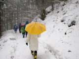 Girl with Yellow Umbrella Walking in Snow and Forest  Jigokudani Monkey Park
