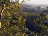 Numinbah Valley from Bellbird Lookout  Binna Burra