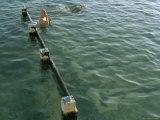 Overhead of Lap Swimmer at Ocean Baths  Bronte