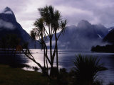 Milford Sound in Morning Mist
