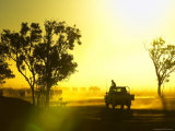 Silhouetted Cattle Muster at Sunset  Armraynald Station