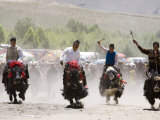 Yak Racing at Gyantse Horse Racing Festival