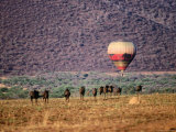 Wildebeests and Hot-Air Balloon