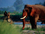 Tourist in Jeep Watching a Large Tusked Elephant