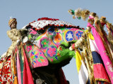 Colourful Elephants at Elephant Festival