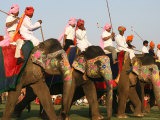 Elephant Polo at the Elephant Festival