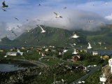 Gulls Fly over Nykvag