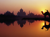 Taj Mahal and Silhouetted Camel and Reflection in Yamuna River at Sunset
