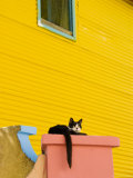 Cat Resting on Pillar Next to Yellow Wall  Barrio La Boca