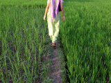 Woman Walking Through Rice Paddy
