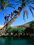 Three Boys Climbing Date Tree  Wadi Bani Khalid