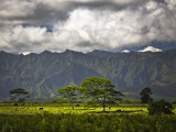 Peaceful Horse Range Setting on the Road to Wailua Falls  with Kauai Mountains in Background