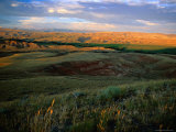 Grasslands and Rolling Hills in the Late Afternoon Sunlight