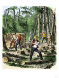 Early Settlers of North America Clearing Land for Homes