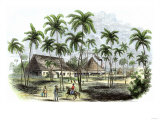 Sugar Plantation in Cuba  1850s