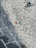 Pigeons on Piazza San Marco  Seen from Campanile Tower