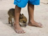 Pet Pig Between Boy's Feet in Amazon Rainforest Village