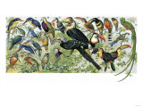 Quetzal  Toucans  and Other Tropical Birds