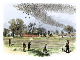 Shooting Passenger Pigeons  Which are Now Extinct  for Sport in Louisiana  1870s